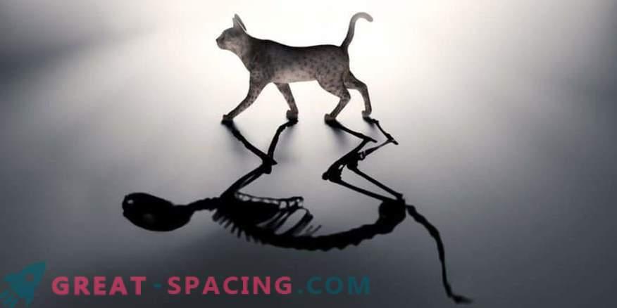¡Los nuevos trucos de Schrödinger! ¿Objetos con dos temperaturas al mismo tiempo?