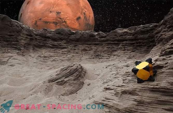 Los erizos pueden saltar alrededor del Sistema Solar